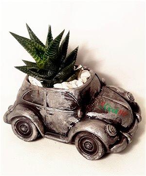 Döküm Arabada Kaktüs Bitkisi