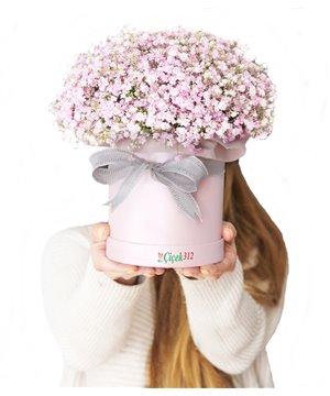 Kutuda Pembe Cipsofilya(Şans Çiçeği)