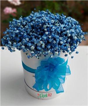 Kutuda Mavi Gipsofilya(Şans Çiçeği)