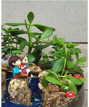 Bizim Kayalıklar Succulent